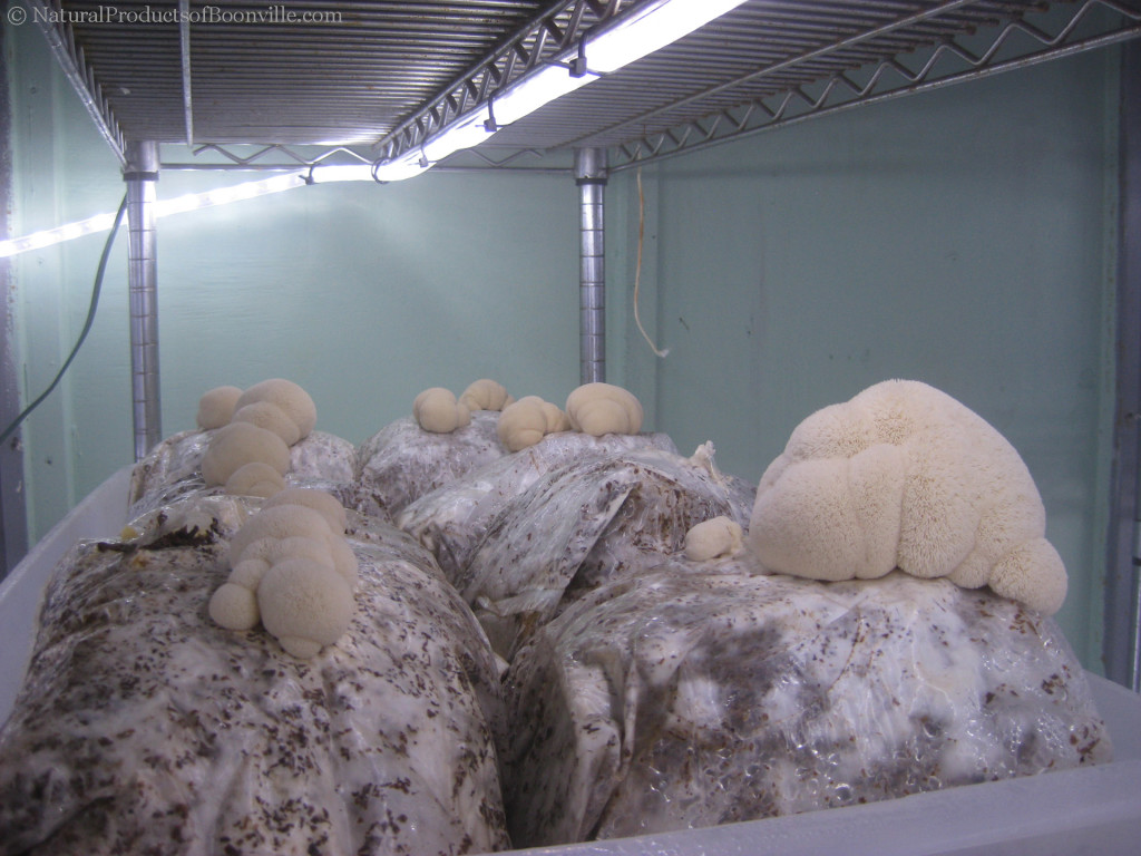 inside of the fruiting chamber