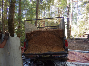 sawdust from Frank's Firewood