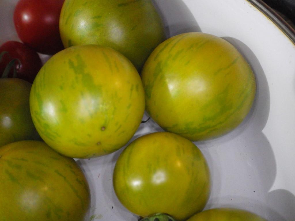 greenbrandy-IMGP7936